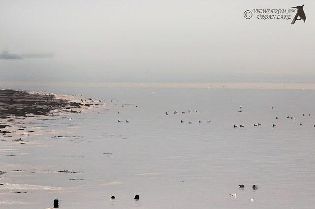 A Mornings Birding in North Kent