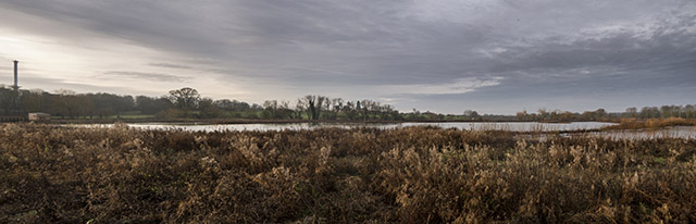 From the River - views over the Floodplain Forest Nature Reserve