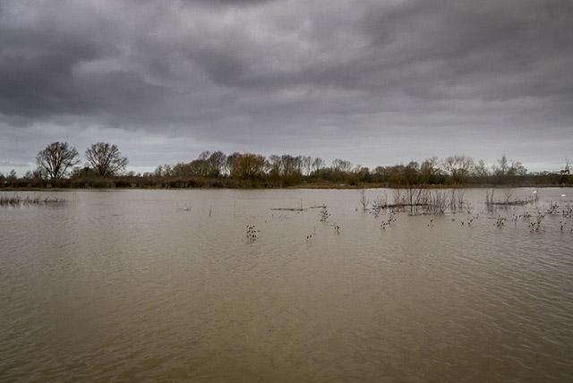 Grey skies over the Floodplain Forest NR