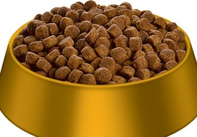 large gold bowl with dog food in the bowl