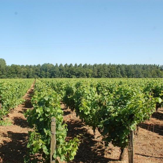 vente propriété viticole Barsac