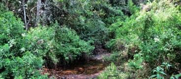 17-Water-stream