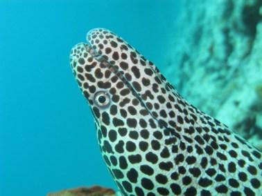 Ishigaki diving