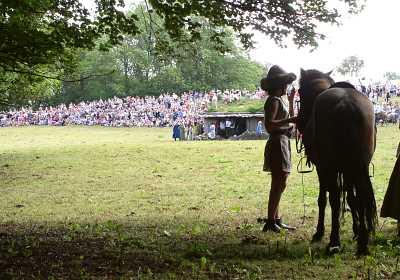 Islansk Hest med Rytter