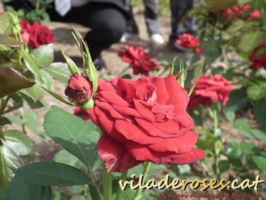 II Fira de la Rosa