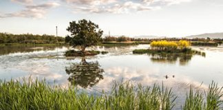 Parc Natural dels Aiguamolls de l'Empordà