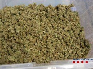 Marihuana valorada en 48.000 euros