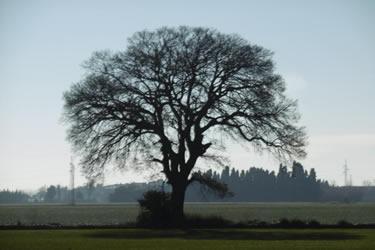 Catàleg d'arbres singulars de l'Alt Empordà