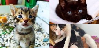 Refugi per animals als Pressupostos Participatius de Roses