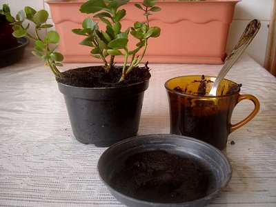 Use a borra do café no combate à dengue