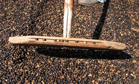 Terreiro de secagem de café