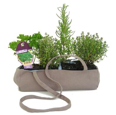 Bolsa vasos com ervas e especiarias