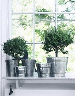 Vasos com plantas em objetos utilitarios também decoram com bom gosto
