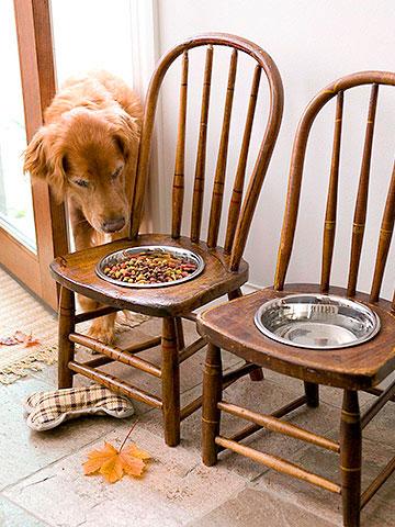 Comedouros de cães encaixados em cadeiras quebradas