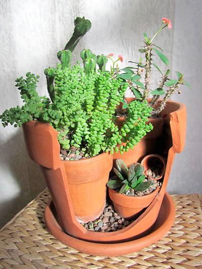 Quatro vasos se transformam num pequeno jardim