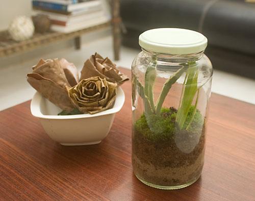 Terrario de baixo custo feito com vidro reciclado e componentes do próprio jardim