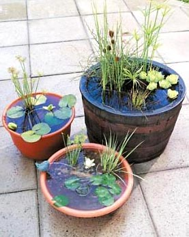 Conjunto de jardins aquáticos com uma pequena fonte