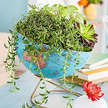 Globo transformado em vaso de plantas
