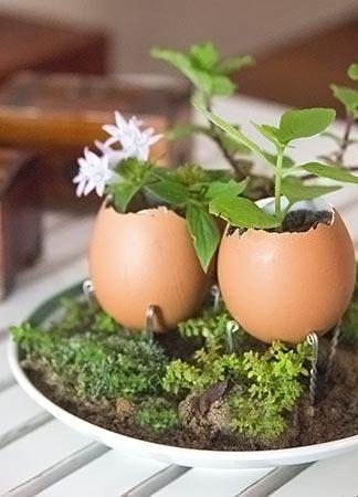 Mudas com reciclagem de casca de ovos