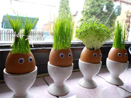 Ovos com cabelinhos
