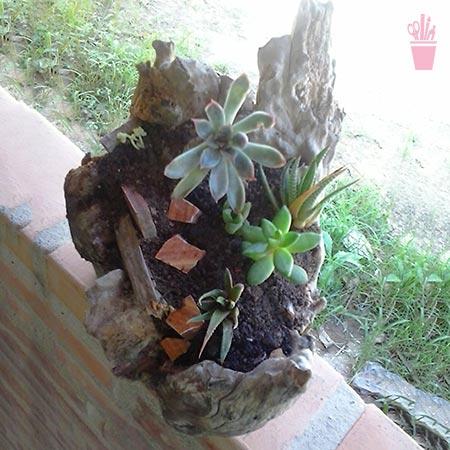 Jardim dentro de um tronco seco