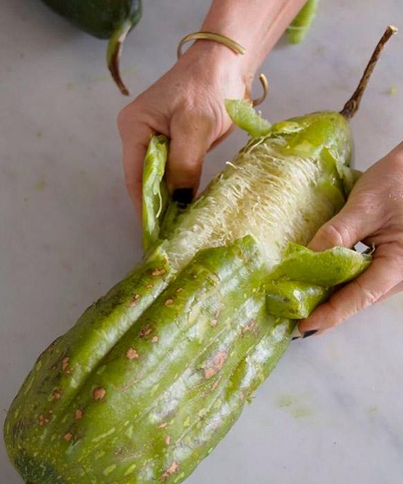 Fruto da Luffa Cylindrica, a Bucha Vegetal