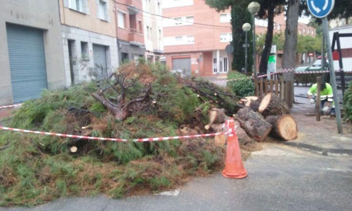 arbre-carrer-les-quadres-2