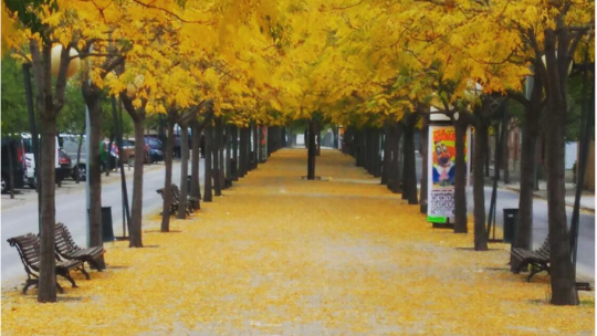 merce-palou-instagram-octubre