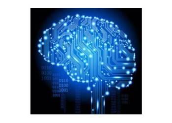 Neurociencia imatge