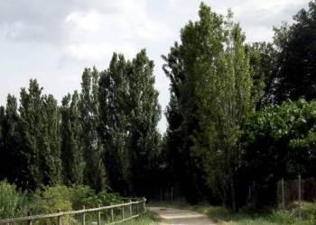 Arbres-Parc-fluvial-arxiu-v22