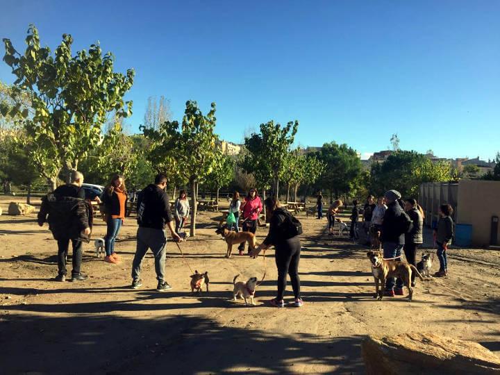 curs educacio canina (2)