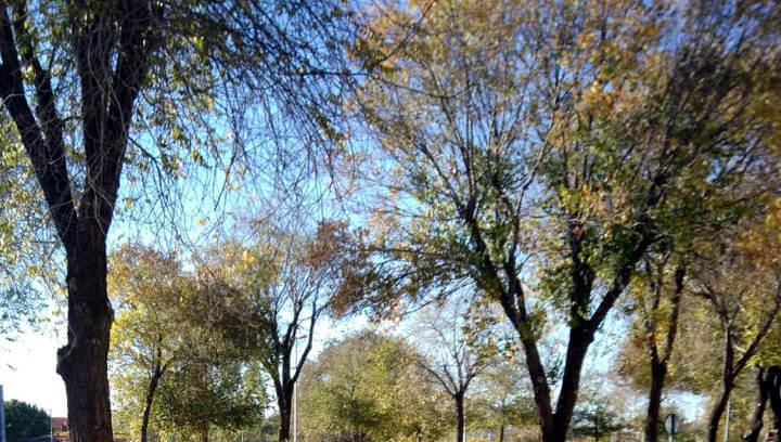 Imatge d'arbres