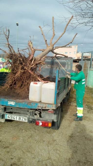 replantacio arbre al Molinet (3)