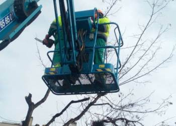 replantacio arbre al Molinet (5)-dest