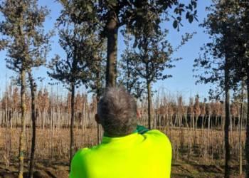 Projecte Vilanova Natura arbres 2-1