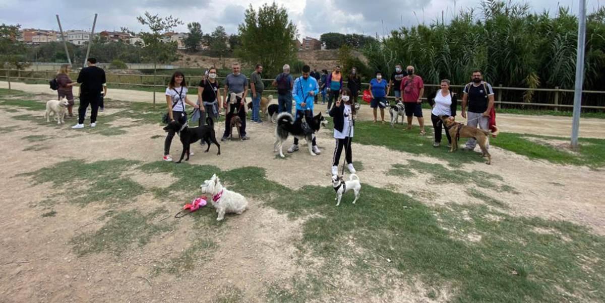 primera festa animals de comanyia (11) v1