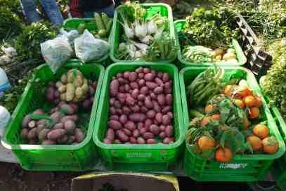 agroecologia vila verde