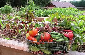Plantando orgânicos Vila Verde