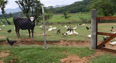 Aves orgânicas Vila Verde