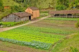Leia este artigo controverso e descubra mais sobre orgânicos
