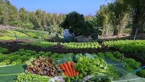 O cultivo orgânico é mais trabalhoso, mas vale a pena!