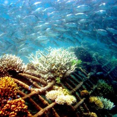 Biorock Pemuteran Smithsonian - Bali, Indonesia, Yayasan Karang Lestari Teluk Pemuteran