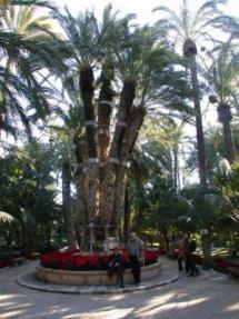 Mooie palmboom in de palmentuin