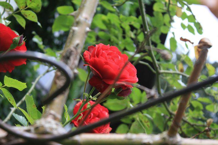 Schöne Blumen in unserem  Gartenbereich