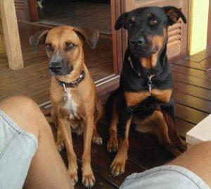 Onze honden Emma en Chester