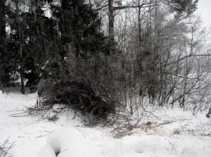 Rannan tekoa, puiden karsinta