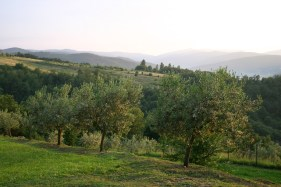 Olive grove at villa for rent in Umbria