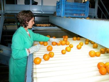 Lavorazione Agrumi