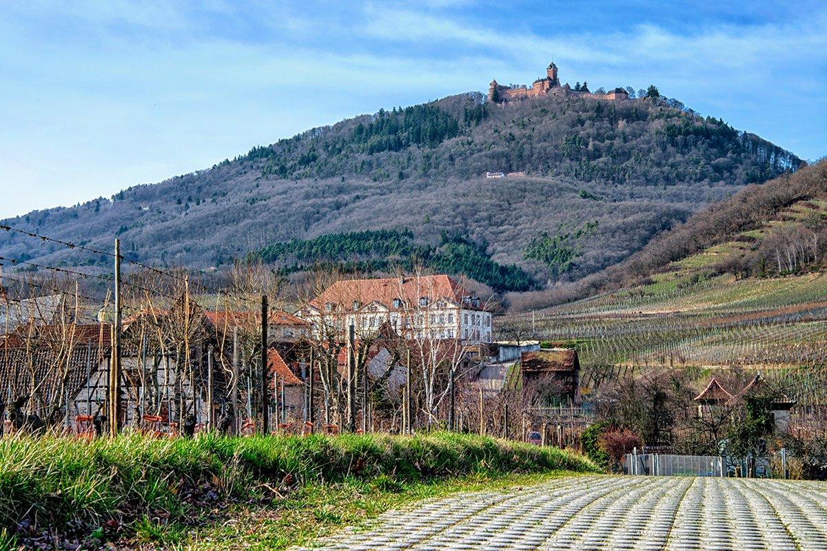 Le Château du Haut-Koenigsbourg qui trône sur les Vosges