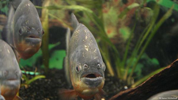Animal-Grieve_Fish